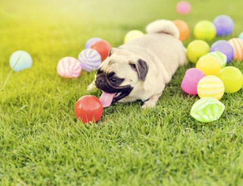 Un jouet pour jouer avec son chien